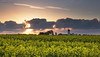 "Hart Burn (""A.S.A."") Tags: cloud windmill sunrise dawn britain cleveland grad daybreak rapeseed hartlepool teeside canonef24105mmf4lisusm leefilters hartvillage canoneos6d 09hardgrad"