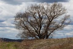 Spring landscape 05012015 067-2 (tprussman) Tags: landscape spring nikon massachusetts northshore marsh rowley 2015 prussman