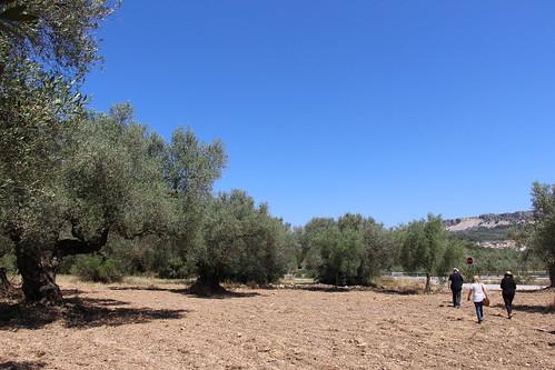#ExcursionesAgro: Xert-Sant Mateu