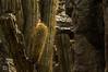 DSC03315 (Braulio Gómez) Tags: barrancadehuentitã¡n biodiversidad caminoamascuala canyon canyonhuentitan faunayflora floresyplantas guadalajara jalisco mountainrange naturaleza sierra senderismo paisaje barrancadehuentitán barranca huentitán ixtlahuacandelrío méxico guardianesdelabarranca