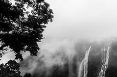 Misty Jog Falls,India. (vjisin) Tags: waterfalls falls jog karnataka india asia inexplore composition tree water mist fog cwc chennaiweekendclickers blackandwhite monochrome monsoon westernghats ghats nikond3200 nikonofficial nikon nikonindia cwc534 twop