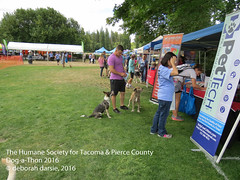 DAT2016_Crowd_1213 (greytoes_99) Tags: agility cat dat2015 dat2016 event humanesocietytacoma people summer tacoma tacomahs volunteers dog humananimalbond lakewood wa us