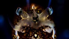 P5299649 (Jeannot Kuenzel) Tags: leica blue sea macro water port photography mediterranean underwater alien under deep scuba diving olympus malta zen supermacro moods asph f28 45mm underwaterworld s2000 dg 240z underwaterphotography extrememacro ois jeannot inon macroelmarit underwatercreature kuenzel z240 maltaunderwater underwatermacro underwateralien supermacrophotography ucl165 wwwjk4unet jk4u epl5 maltaunderwatermacro maltaunderwaterphotography bestmaltaunderwaterpictures maltamacro maltascubadiving underwatersupermacro jeannotkuenzel aliensofthedeepblue superextrememacro aliensofthesea