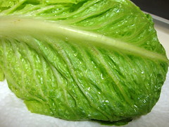 Washed Romaine Lettuce. (dccradio) Tags: food green water nc northcarolina vegetable lettuce eat papertowel washed veggie waterdrops romaine lumberton romainelettuce robesoncounty