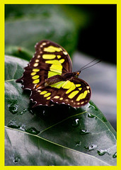AH62_8032 (der_andyrandy) Tags: schmetterling butterfly tiere canoneos7d thisphotorocks insekt amazingamazing