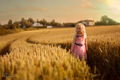 ... golden hills ... (Margarita K...) Tags: uk sunset portrait england girl childhood gold nikon child britain wheat ngc great grain goldenhour fairytales mkphotography d5200 margaritakphotography