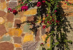 colorful wall with flowers (shadijan) Tags: flowers red walls