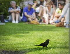 Merel Vogel op het theeveld