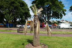 Washingtonia - Torquay (Torquay Palms) Tags: torquay torbay tor bay the english riviera south devon devons beautiful westcountry west country uk united kingdom gb great britain england kings garden gardens seafront promenade washingtonia palm tree july 2016