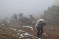 Material  schleppen (Alfesto) Tags: trekking nepal jorsalle namche namchebazar himalaya khumbaarea sagarmathanationalpark