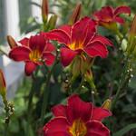 oneplant, ouryard, jdy197 XX201607158817.jpg thumbnail