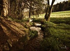 Im schönsten Wiesengrunde... (Schneeglöckchen-Photographie) Tags: forest meadow wiese wald