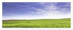 between heaven and earth (mamuangsuk) Tags: 6 sunshine switzerland countryside suisse oxygen grandson greenfield sunnyday quietness walkinginnature vaud chlorophyll gnd 24105l betweenheavenandearth backtotheroots naturalsettings mamuangsuk blueskyandgreenmeadows airplanepathinthesky