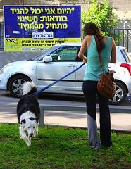 Walking along Sderot Rothschild (Rothschild boulevard) in Tel Aviv, Israel (jackfre 2) Tags: trees israel telaviv walk terraces restaurants bikes bicycles oasis promenade pedestrians bauhaus benches cafs rothschildboulevard