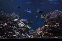 Tropical fish (harum.koh) Tags: