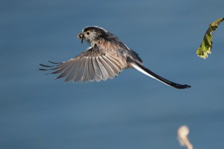 LTT flying with meal