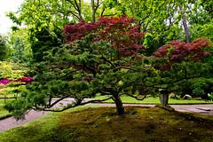 _DSC3743 (durr-architect) Tags: park trees plants colour water garden japanese pond estate country bridges hague pavilion lantern thehague sculptures cask clingendael