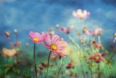 Summer  (Malena ) Tags: summer michigan flowers texture detroit malena
