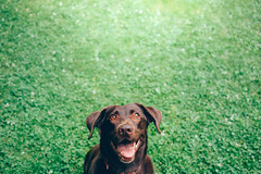 (LiamFromNB) Tags: dog dogs pets animals fetch stay green nature outside outdoors day light sun sunny canon canada