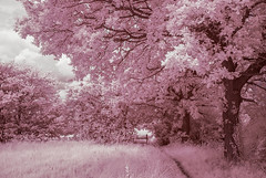 Candy Floss (Martzimages) Tags: trees path ir infrared pink martzimages