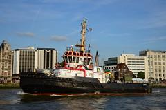 Tall Ship's Race 2016 Union Grizzly DST_4645 (larry_antwerp) Tags: uniongrizzly smittowage antwerp antwerpen       port        belgium belgi          schip ship vessel        schelde        tallshipsrace