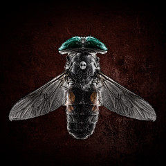 Skull Bug (Tortured Mind) Tags: 100mmf28 11 bug creative d800 dslr eyes gear lens macro prime skull square subject type