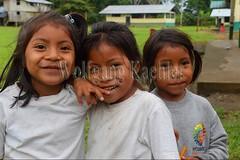 60071468 (wolfgangkaehler) Tags: 2016 southamerica southamerican ecuador ecuadorian latinamerica latinamerican rionapo rionapoecuador rionaporiver rainforest coca cocaecuador laselvalodge elpilchi kichwaindian community people child children girl portrait closeup smile smiling girls three shy