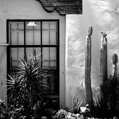 Siesta Time (Dom Guillochon) Tags: house heatwave rest wall window plants cacti life nature humans siesta time noiretblanc