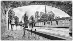 Notre Dame de Paris (Les_Pas_Presses) Tags: abstrait architecture cathédrale cokinnd4 explore exposition humour immeuble insolite lespaspressés matériel monument mystère nikond750 noirblanc notredame palais paris pont poselongue quaideseine rue sigma2470 streetphoto ville voyage
