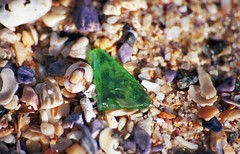Green Glass [Nikon F5 Film] (Aviator195) Tags: kodak kodakfilm kodakektar kodakektar100 ektar ektar100 ektarfilm film filmphotography filmisnotdead filmphotos filmscan filmphoto nikon nikonfilm nikonf5 f5 epson epsonperfectionv550 epsonv550 v550 highquality highqualityfilmscan macro small closeup sand sandy shelly beach manly manlybeach shellybeach northernbeaches tiny shells shell sigma