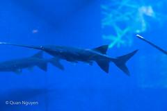FujiXE2-0191 (QTTheory) Tags: cvg cincinnati ohio newport aquarium newportaquarium fujifilm fujinon xe2 xf 1855mmf284rlmois