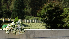 DN9A1252 (Josette Veltman) Tags: holten holterberg cemetery begraafplaats warcemetery oorlog wo2 slachtoffers canadese soldaten tweedewereldoorlog sallandseheuvelrug overijssel salland