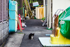 Today's Cat@2016-07-29 (masatsu) Tags: cat catspotting thebiggestgroupwithonlycats pentax mx1