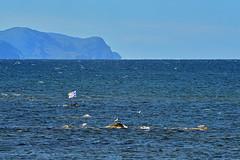 Newfoundland (Zircon_215) Tags: newfoundlandflag ocean bakersbrook grosmornenationalpark newfoundland seagulls flag provincialflag newfoundlandprovincialflag