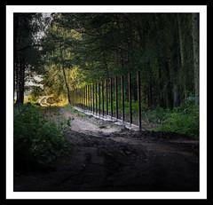 Man into nature - Fence (derek_michalski) Tags: manintonature fineartphotography derekmichalskiphotography forest fence border nature naturallight