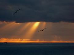 volo sincronizzato (fotomie2009) Tags: sea italy clouds italia nuvole mare liguria sunbeam raggi ligure savona ponente balcorama
