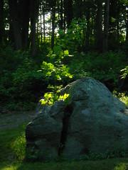 IMGP9360 Plant thriving inside split boulder (shutterbroke) Tags: plant pentax boulder optio split wg10 shutterbroke