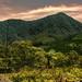 Hills of Negros