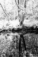 _DSC3681-2 (durr-architect) Tags: park trees plants plant flower colour tree water garden pond estate outdoor country bridges hague foliage pavilion serene sculptures cask the clingendael