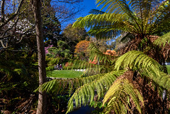 Catching the Sun (Jocey K) Tags: flowers trees newzealand christchurch sky people spring shadows lawn azalea treefern ilamgardens