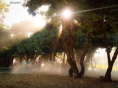O Jardineiro (@fisiotur) Tags: trees brazil sun luz sol brasil sunrise work campus de golden do minas gerais gardening smoke samsung social hour jardim worker neblina job federal jardins trabalho gardener horizonte bh universidade rvores pampulha belo s7 p nvoa trabalhador poeira ufmg jardineiro brazilianphotographers