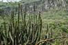 DSC03246 (Braulio Gómez) Tags: barranca barrancadehuentitán biodiversidad caminoamascuala canyon canyonhuentitan faunayflora floresyplantas guadalajara guardianesdelabarranca huentitán ixtlahuacandelrío jalisco mountainrange méxico naturaleza paisaje senderismo sierra