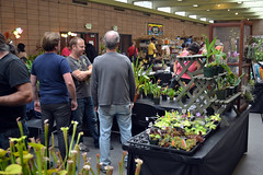 2016-07-23 08785 Orchid Show, SF County Fair Bldg (Dennis Brumm) Tags: sanfrancisco california july 2016 orchids exposition flowers plants bromeliads