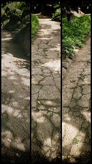 Which path to follow? (lesliegill) Tags: 2016 colour green japan july omiya park path rainyseason shrine sigmasdq sunny triptych