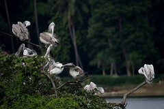 Beauty Saloon (Self-service only) (Ramesh Adkoli) Tags: birds landscape lalbagh d500 capturenx