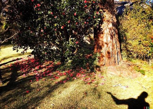 Presenting more early bloomers :) #hipstamatic #springsoon #snapseed #mextures #shadow #tree #flowers #greenery #green