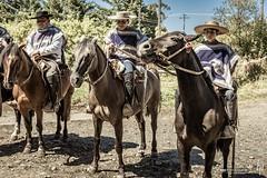 Huasos (hapePHOTOGRAPHIX) Tags: 152chl amricadelsur chile cowboy fognlosalerces huaso hut loslagos nikond750 object pferd southamerica sdamerika tier animal chilenischerlandarbeiter equestrian equine hapephotographix hat horse horses sombrero puertomontt xregin cl
