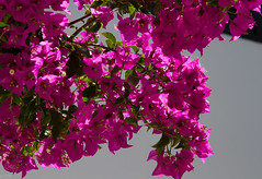 MALLORCA JUNE 16-7390 (Tyne Decca) Tags: holiday puerto spain pollensa 2016 balearics