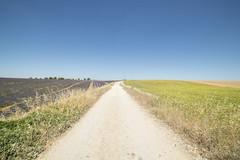 Divisioni (Mauro_Amoroso) Tags: sky panorama france green nature landscape nikon purple d2x lavander francia paesaggio nationalgeographic provenza lavanda natgeo d600 nital valensole nikonlandscape nikonitalia amorosomauroadventures mauroamorosoadventures