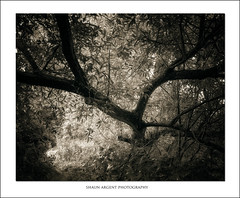 Stretching (shaun.argent) Tags: woodland woods water trees tree texture willow leaves nature morning mono shaunargent summer